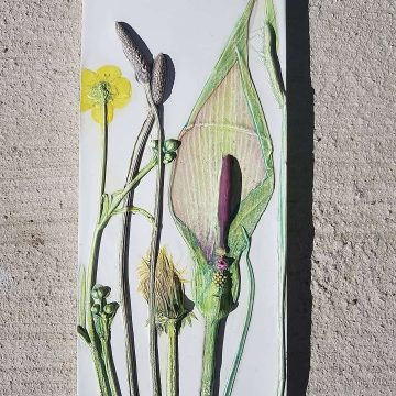 Arum Lily, Plantain, Dandelion, Buttercup & Wild Grasses - Bespoke Botanical Wall Art