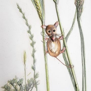 Harvest Mouse in Corn - Bespoke Botanical Wall Art
